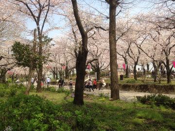 sumidakoen_hanamichi10