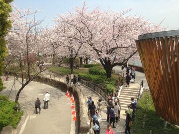 sumidakoen_hanamichi11